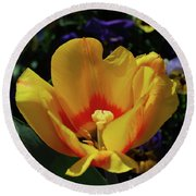 Very Pretty Flowering Yellow Tulip With A Red Center Round Beach Towel