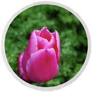 Very Pretty Garden With A Dark Pink Tulip Round Beach Towel