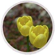 Very Pretty Pair Of Flowering Yellow Tulip Blossoms Round Beach Towel