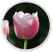 Very Pretty Pale Pink Tulip Blossom In Spring Round Beach Towel