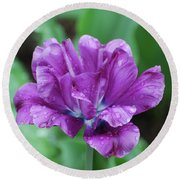 Very Pretty Purple Tulip With Dew Drops On The Petals Round Beach Towel