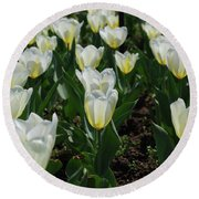 Very Pretty Spring Garden With Flowering White Tulips Round Beach Towel