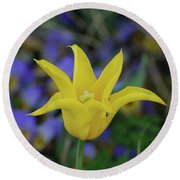 Very Pretty Yellow Tulip With Spikey Petals Round Beach Towel