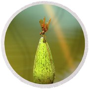 Very Small Dragonfly In Vertical Position Round Beach Towel