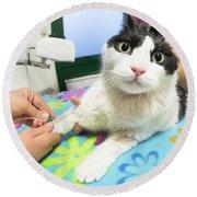 Veterinarian Cat Care Round Beach Towel