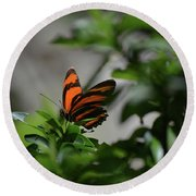 Vibrant Colors To A Orange Oak Tiger Butterfly Round Beach Towel