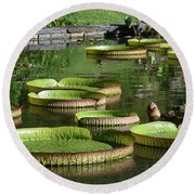 Victoria Amazonica Giant Lily Pads  Round Beach Towel