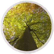 View To The Top Of Beech Tree Round Beach Towel