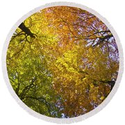 View To The Top Of Beech Trees Round Beach Towel