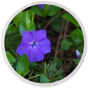 Vinca Blooming In The Forest Round Beach Towel