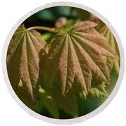 Vine Maple Leaves Round Beach Towel
