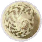 Vintage Seashell Still Life Round Beach Towel