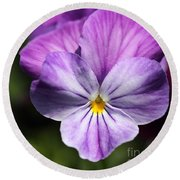 Viola Named Columbine Round Beach Towel
