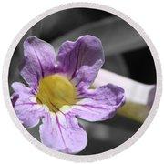 Violet Trumpet Vine Selective Color Round Beach Towel