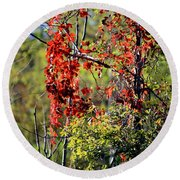 Virginia Creeper Round Beach Towel