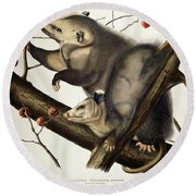 Virginian Opossum Round Beach Towel