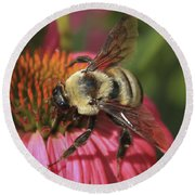 Visitor Up Close Coneflower  Round Beach Towel