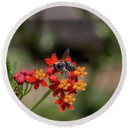 Visor Wearing Bee Pollinates A Colorful Flower Round Beach Towel