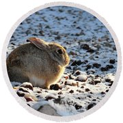 Wabbit Round Beach Towel