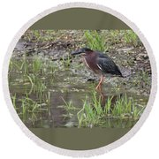 Wading Green Heron Round Beach Towel