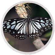 Waiting --- Rice Paper Butterfly Round Beach Towel