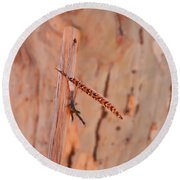 Walking Stick And Pheasant Feather Round Beach Towel