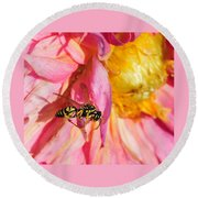 Wasp And Flower Round Beach Towel