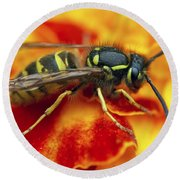 Wasp In The Bloom Round Beach Towel
