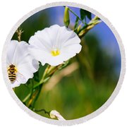 Wasp On A White Flower Round Beach Towel