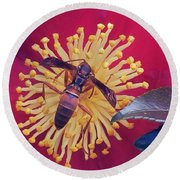 Wasp On Indian Hawthorn Round Beach Towel