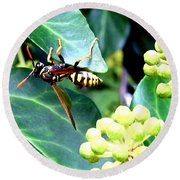 Wasp On The Ivy Round Beach Towel