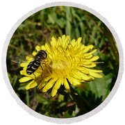 Wasp Visiting Dandelion Round Beach Towel