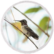 Watchful Hummingbird Round Beach Towel