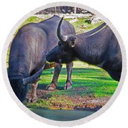 Watching 2 Water Buffalos 1 Water Buffalo Watching Me Round Beach Towel