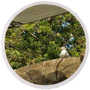 Watching Over Penguins Round Beach Towel