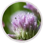 Water Droplets On Chives Flowers Round Beach Towel