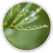 Water Droplets On Evergreen Round Beach Towel