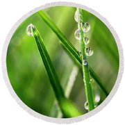 Water Drops On Spring Grass Round Beach Towel