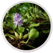 Water Hyacinth Round Beach Towel
