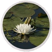 Water Lilies And Pads Round Beach Towel