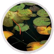 Water Lilies No 1 Round Beach Towel