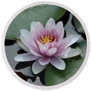 Water Lily 1 Round Beach Towel