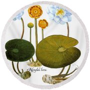 Water Lily, 1613 Round Beach Towel