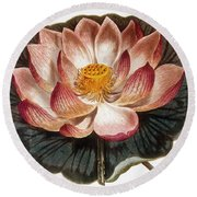 Water Lily, 1806 Round Beach Towel
