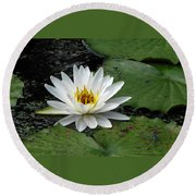 Water Lily 2 Round Beach Towel