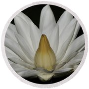 Water Lily 23 Round Beach Towel