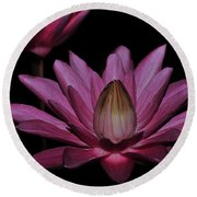 water lily 27 Dark Pink Night Blooming Water Lily Round Beach Towel
