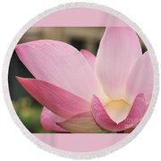 water lily 32 Pink Lotus Macro Round Beach Towel