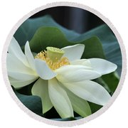 water lily 34 Yellow Lotus I Round Beach Towel