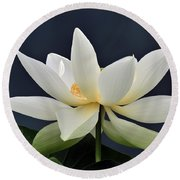 Water Lily 36 Round Beach Towel
